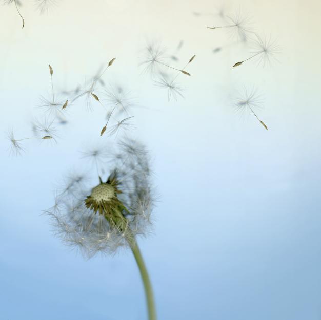 Die Lehre der Elemente - Astrologie Luft - Andrea Moutty